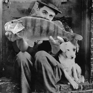 Chaplinbarschoe
